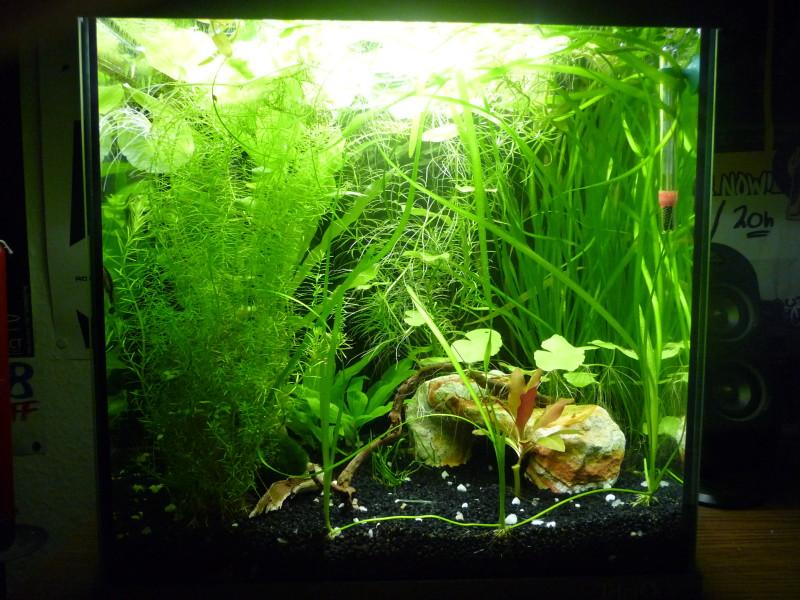 eiswürfel ins aquarium
