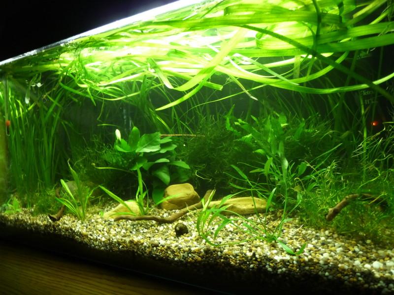 11 tipps f r dein perfektes kampffisch aquarium11 tipps for Kampffische arten