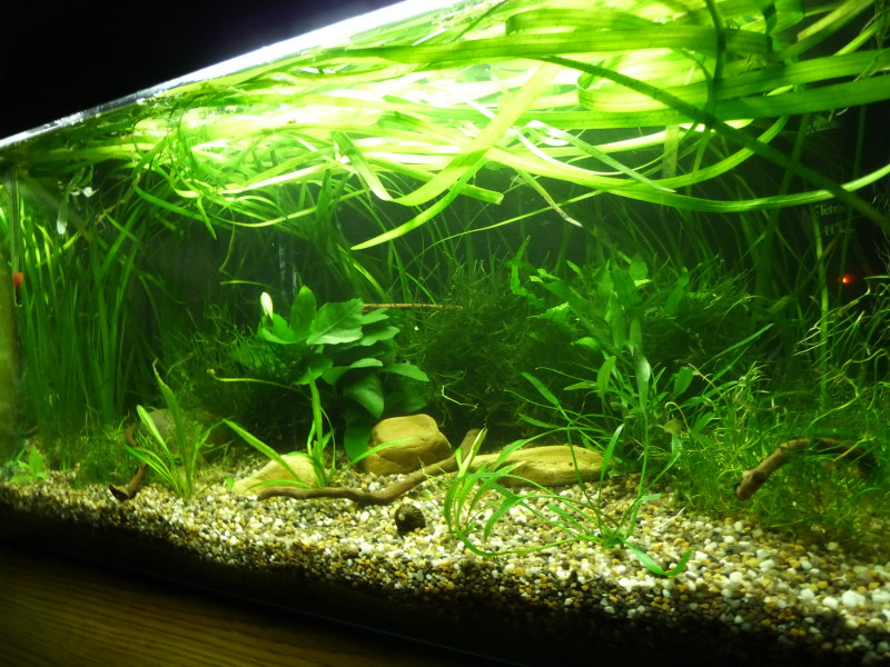 11 tipps f r dein perfektes kampffisch aquarium11 tipps for Aquarium innenfilter